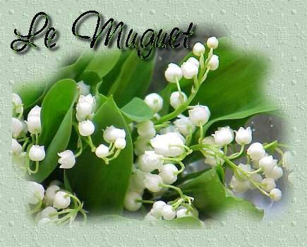1 er mai le muguet centerblog - Ou planter le muguet ...